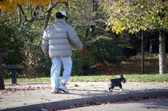 Autumn dog walker. Woman walking a dog in the park royalty free stock image