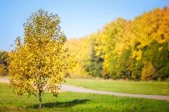 autumn dostępne drzewny ilustracyjny wektora Fotografia Royalty Free