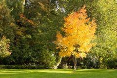 autumn dostępne drzewny ilustracyjny wektora Obraz Stock
