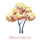autumn dostępne drzewny ilustracyjny wektora ilustracja wektor