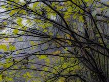autumn dostępne drzewny ilustracyjny wektora Obrazy Stock
