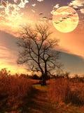 autumn dostępne drzewny ilustracyjny wektora Obraz Royalty Free