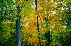 autumn dostępne drzewny ilustracyjny wektora Obrazy Royalty Free