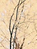 autumn dostępne drzewny ilustracyjny wektora Fotografia Stock