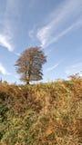 autumn dostępne drzewny ilustracyjny wektora Zdjęcie Stock