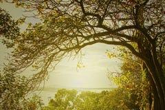 autumn dostępne drzewny ilustracyjny wektora Zdjęcia Stock