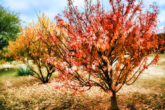 Autumn Dreams Royalty Free Stock Photo