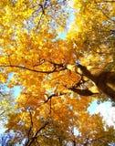 Autumn dreams Royalty Free Stock Photos