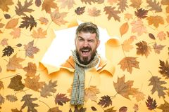 Autumn Dress. Portrait of autumn man. Space for your text. Stylish bearded man. November background. Men fashion autumn. Copy space for text. Autumn is a stock photography
