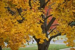 Autumn Dressing das folhas amarelas imagem de stock royalty free