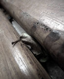 Autumn. Dried leaf hidden between two wooden beams Stock Photography