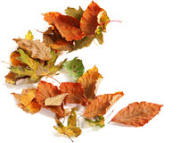 Autumn dried leafs Stock Photography