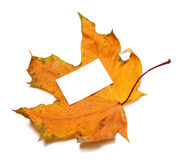 Autumn dried maple-leaf with white empty price card Royalty Free Stock Images