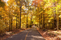 Autumn Drive Stock Photography