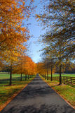 Autumn Drive. A long driveway on an autumn morning Royalty Free Stock Image