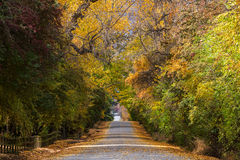 Autumn Drive Fotografia de Stock Royalty Free