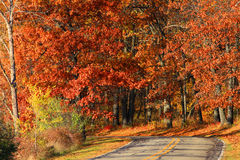 Autumn drive Stock Images
