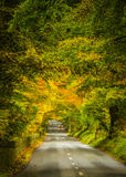 Autumn Drive. A grove of trees bursting with autumn color with a lone vehicle driving on the road towards me in County Wicklow, Ireland Stock Images