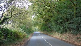 Autumn drive. Leaves falling on the road Royalty Free Stock Images