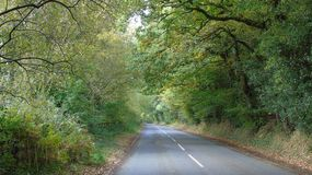 Autumn drive. Leaves falling on the road in the country Stock Images