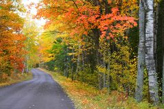 Autumn Drive Way Stock Photo