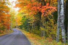 Autumn Drive Way Stock Photo