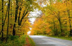 Autumn Drive Way Stock Photography