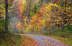 Autumn Drive Way Royalty Free Stock Images