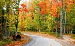 Autumn Drive Way Stock Photos