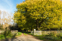 Autumn Driveway Royalty Free Stock Photos