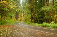 Autumn driving Royalty Free Stock Images