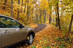 Autumn driving Stock Images