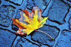 Autumn drop leaf Stock Photos