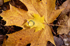 Autumn droplet Stock Photography