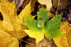 Autumn droplet Royalty Free Stock Image