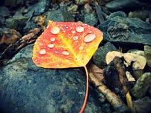 Autumn Droplets Stock Afbeelding