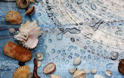 autumn, drops of water, seashells and the sea near by. royalty free stock image