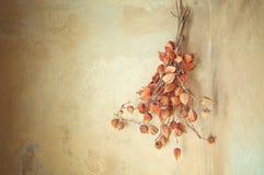 Autumn dry flower Royalty Free Stock Photos
