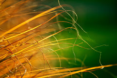 Autumn dry grass Stock Images