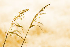 Autumn Dry Grass Royalty Free Stock Photos