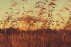 Autumn dry grass Stock Image