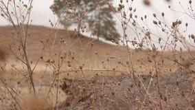 Autumn dry grass focus on tree nature landscape stock video