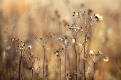 Autumn dry grass sedge Stock Photo