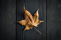 Dry leaf on a dark background royalty free stock photo
