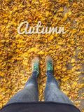 Walk on the Dry leafs in Autumn. Dry leaf on floor Stock Image