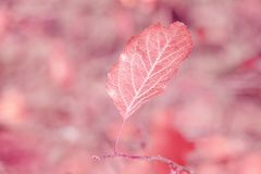 Autumn dry leaf is large Royalty Free Stock Photos
