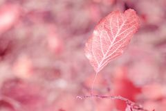 Autumn dry leaf is large Stock Photography