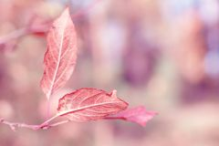 Autumn dry leaf is large Royalty Free Stock Images