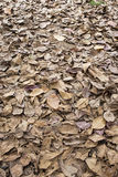 Autumn dry leaves fall Royalty Free Stock Photography