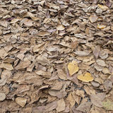 Autumn dry leaves fall Stock Photo